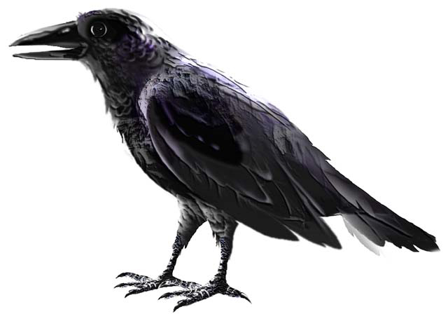 Interpreting A New Language Celtic Meaning Of Raven Calls